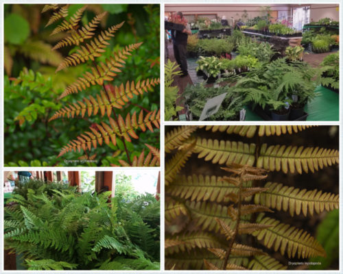 2019 Fern Fest with Labels